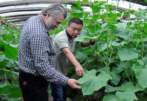 中国农业和国外农业的差距